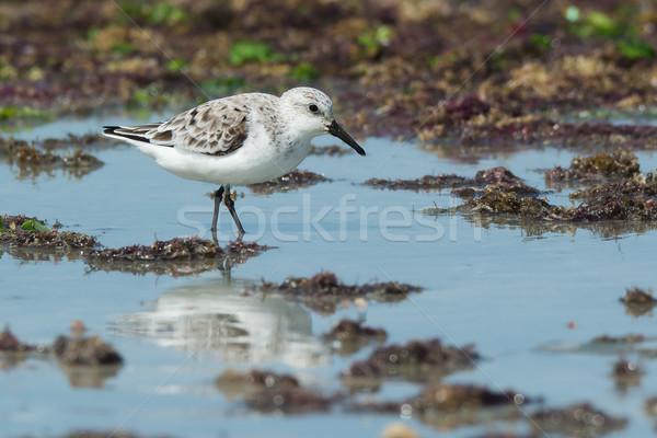 Hínár tengerpart víz étel tenger homok Stock fotó © davemontreuil