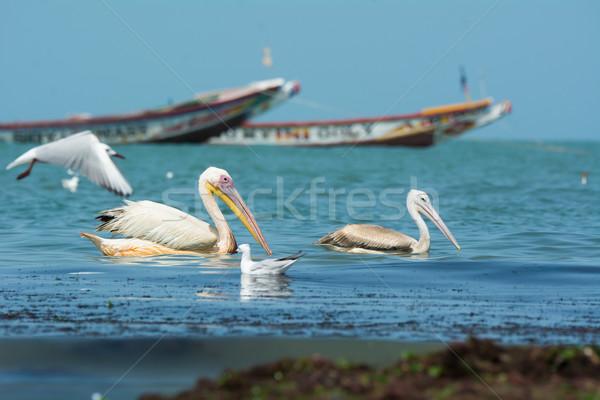 Stock fotó: Nagyszerű · fehér · lebeg · helyi · halászat · hajók