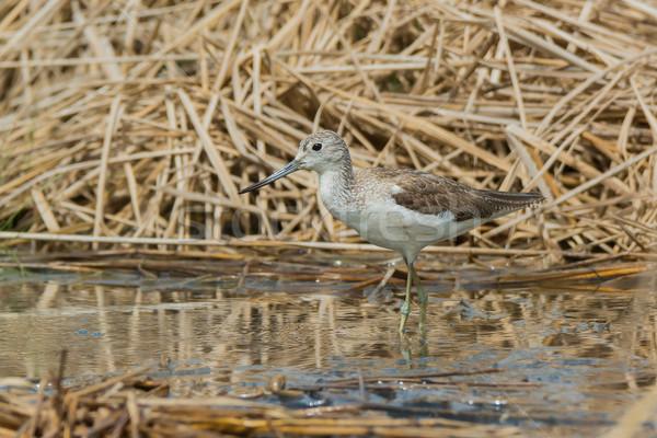 бассейна сушат природы птица ходьбе Африка Сток-фото © davemontreuil