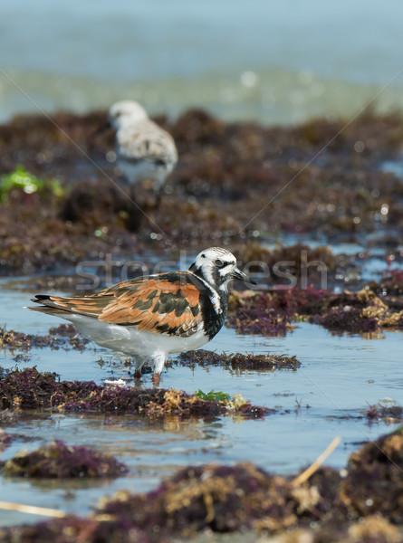 Zeewier water zomer oceaan afrika dier Stockfoto © davemontreuil