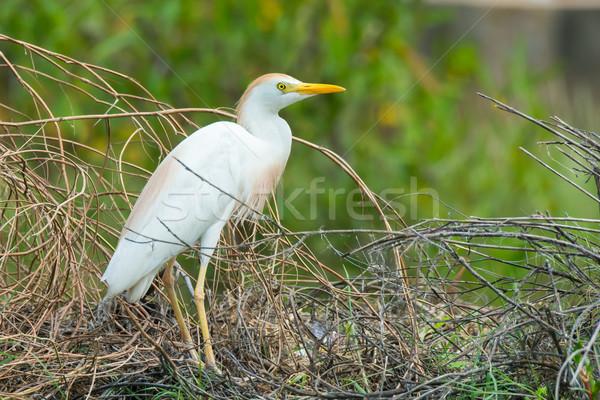 Vee zoeken vogel permanente materiaal Stockfoto © davemontreuil