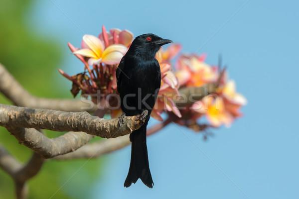 цветения птица вилка красивой храма Сток-фото © davemontreuil