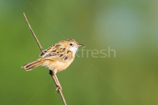 Védtelen bot madár gyönyörű szép aranyos Stock fotó © davemontreuil