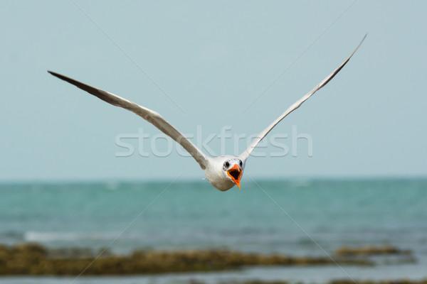 Battant tête oiseaux Afrique effrayant Photo stock © davemontreuil