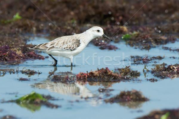 Alga praia água comida mar areia Foto stock © davemontreuil