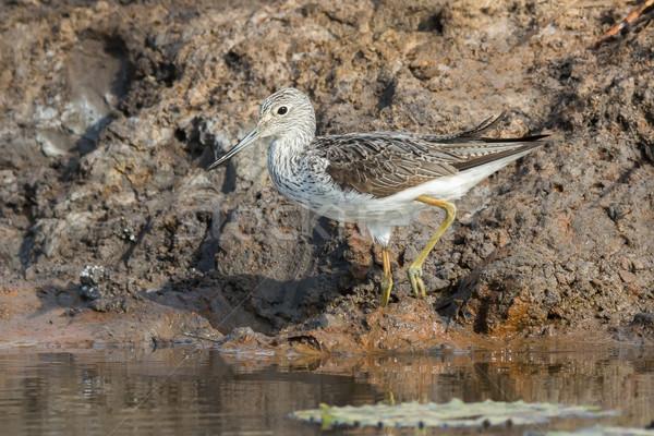 Sáros bank víz természet madár fehér Stock fotó © davemontreuil