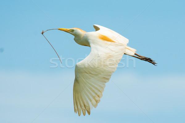скота полет материальных птица Flying Сток-фото © davemontreuil
