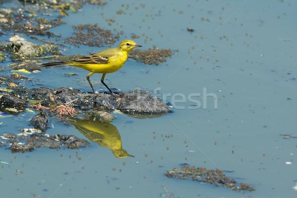 英国の 黄色 立って ごみ 下水 ストックフォト © davemontreuil