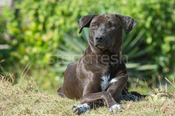 Portrait of a dog near the beach Stock photo © davemontreuil
