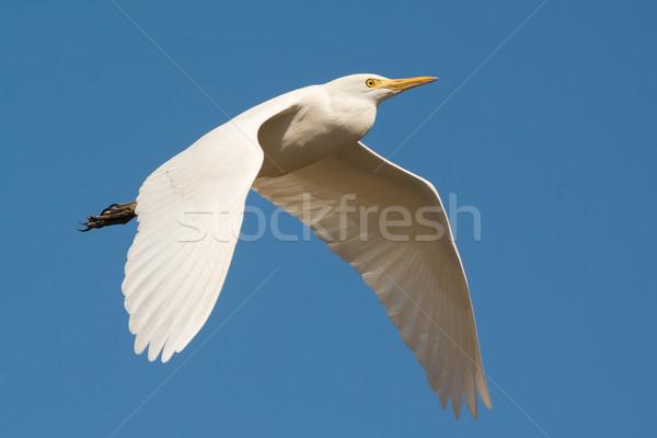 скота полет Flying прошлое синий птица Сток-фото © davemontreuil