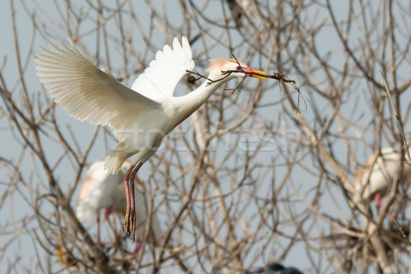 скота Stick назад гнезда природы Сток-фото © davemontreuil
