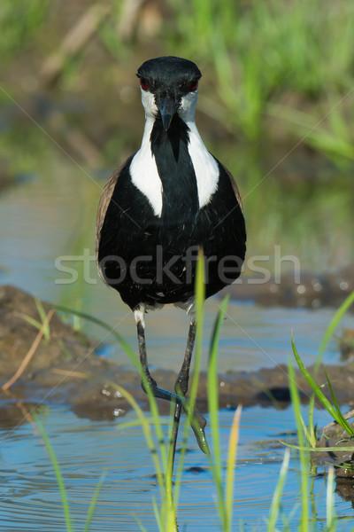 Doğrudan göz göz teması su doğa Stok fotoğraf © davemontreuil
