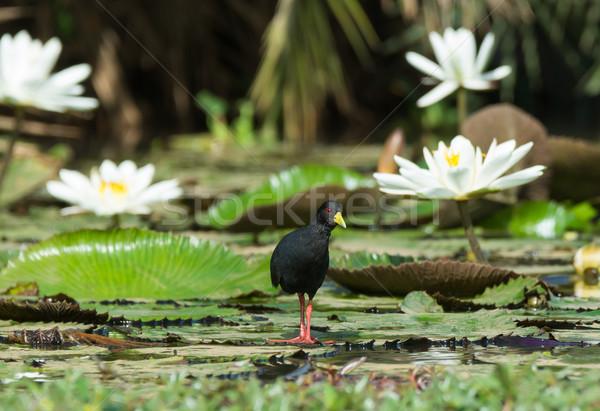 черный Постоянный воды Сток-фото © davemontreuil