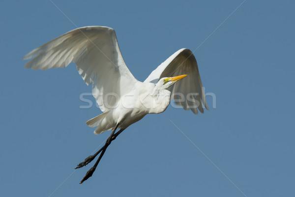 Magnifique blanche jambes croisées vol bleu jambes Photo stock © davemontreuil