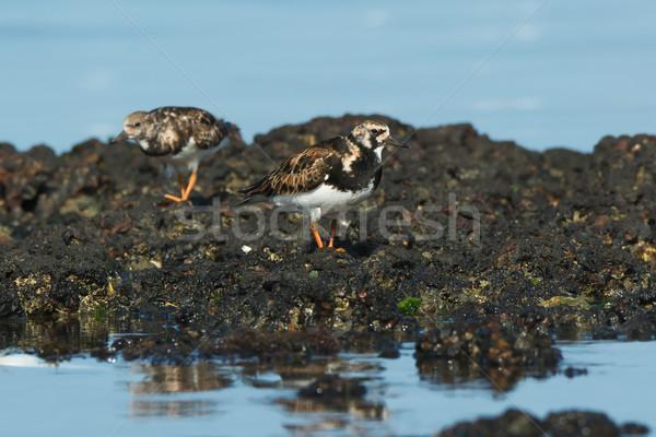 Védtelen kövek alacsony árapály víz óceán Stock fotó © davemontreuil