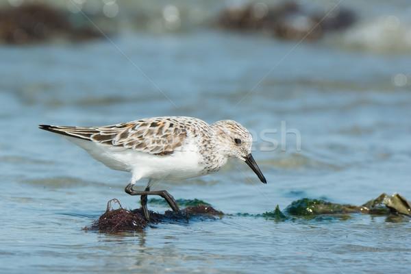 Alimentaire rive eau mer Afrique Photo stock © davemontreuil