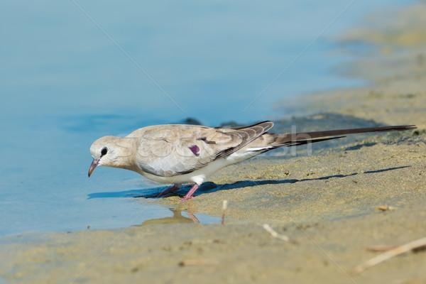 女性 鳩 水 穴 ダウン ストックフォト © davemontreuil