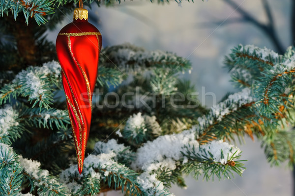 Red twisty Christmas icicle on a snowy tree Stock photo © david010167