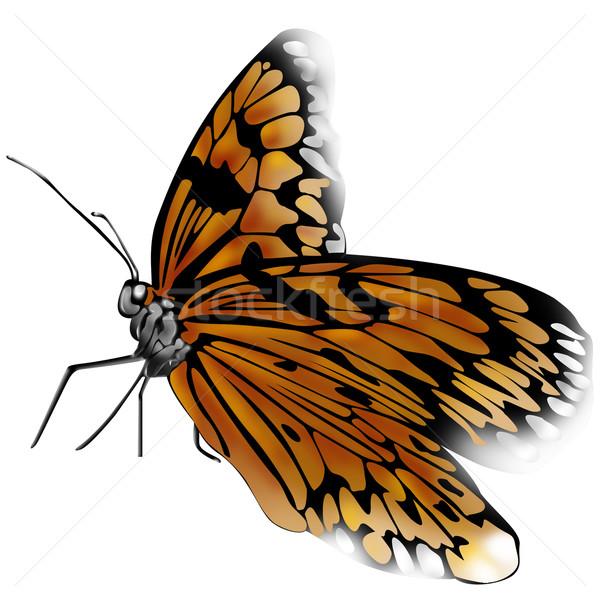 Motyl real wiosną charakter latać owadów Zdjęcia stock © davisales
