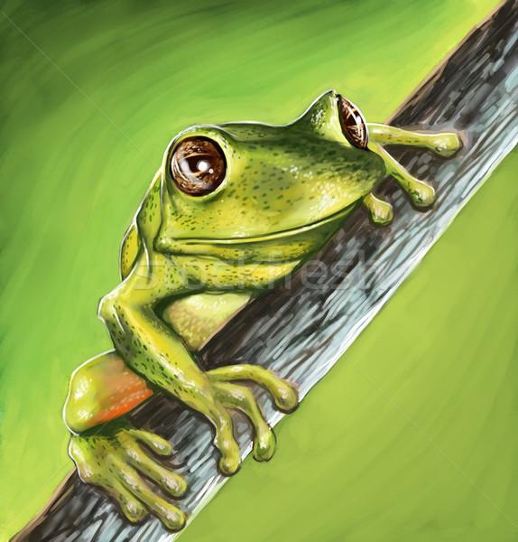 Weinig pad grote ogen stick ogen natuur Stockfoto © davisales