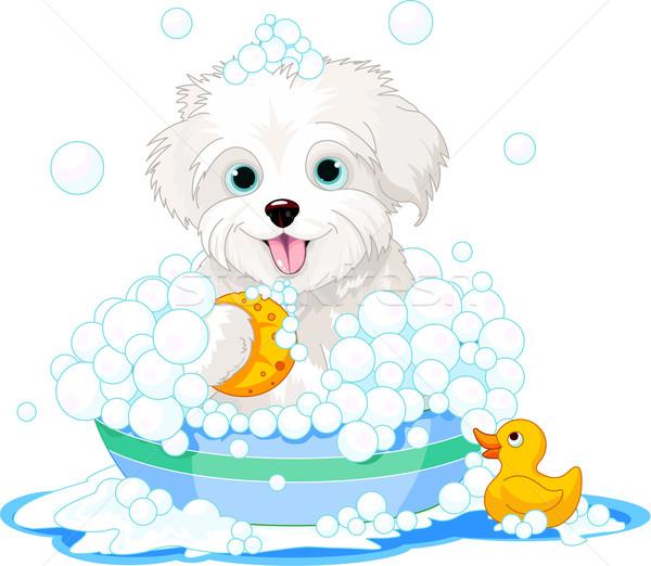 Fluffy dog having a bath Stock photo © Dazdraperma