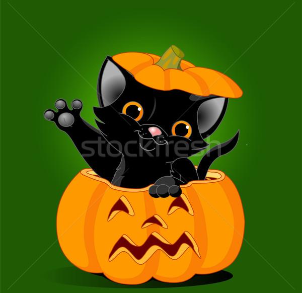 Kat pompoen zwarte kitten springen uit Stockfoto © Dazdraperma