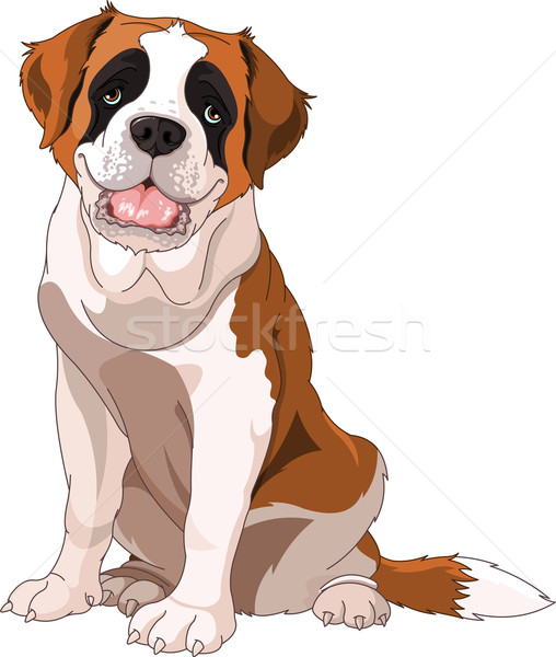 St. Bernard Dog  Stock photo © Dazdraperma