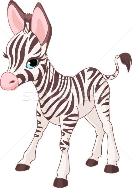 Cute Zebra Foal Stock photo © Dazdraperma