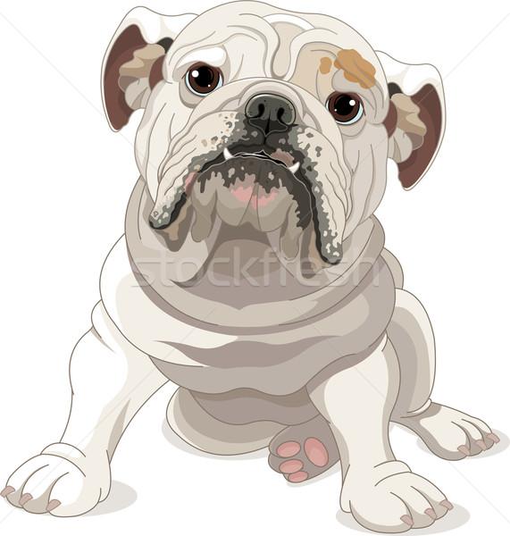 Angol bulldog illusztráció izolált fehér kutya Stock fotó © Dazdraperma