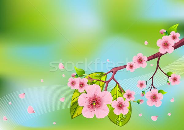 Floral Spring background Stock photo © Dazdraperma