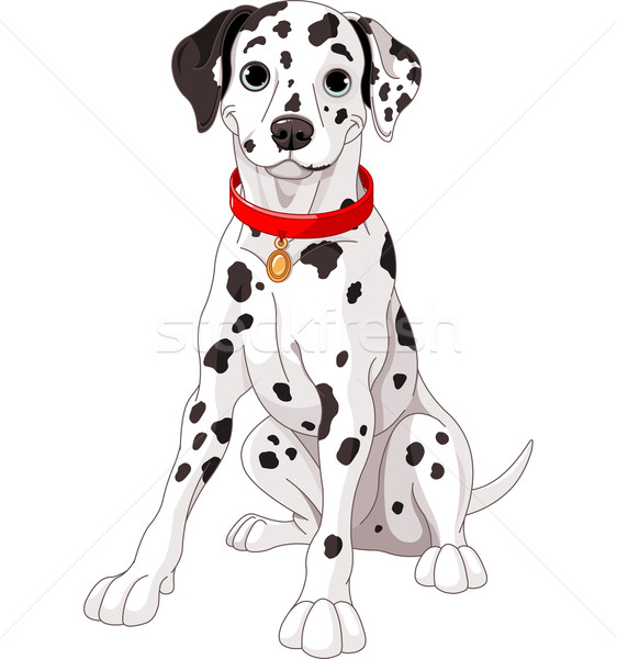 Cute Dalmatian Dog Stock photo © Dazdraperma