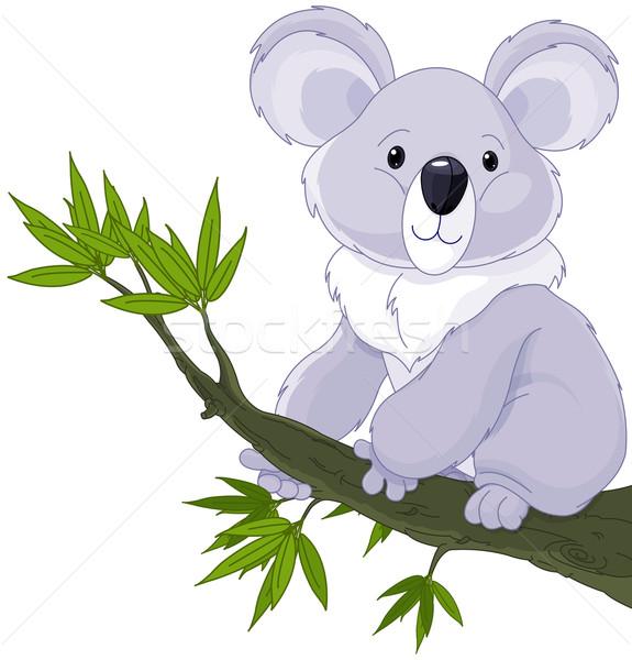 Koala on a Tree  Stock photo © Dazdraperma