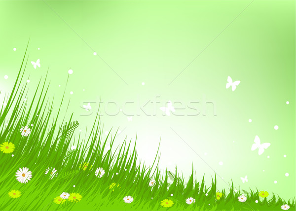 Meadow praise background Stock photo © Dazdraperma