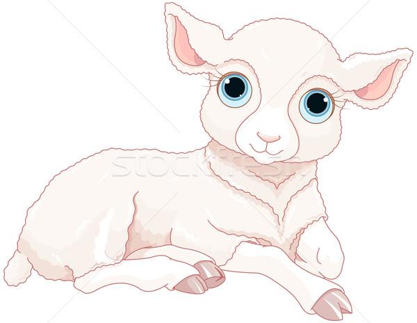 Stock photo: Baby sheep