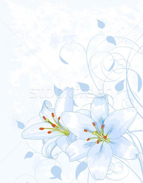 Lilly on light blue background Stock photo © Dazdraperma