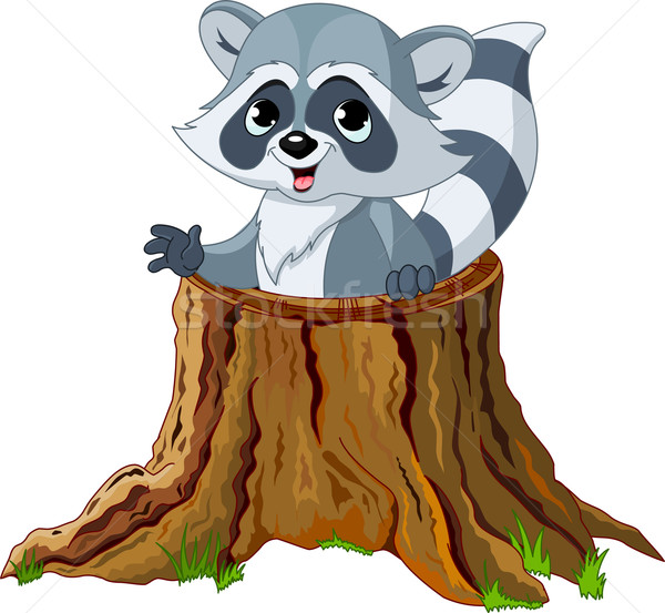 Raccoon in tree stump Stock photo © Dazdraperma