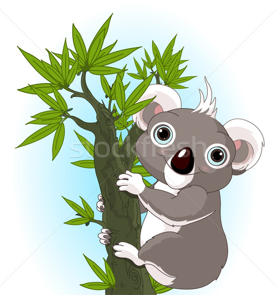Cute koala on a tree Stock photo © Dazdraperma