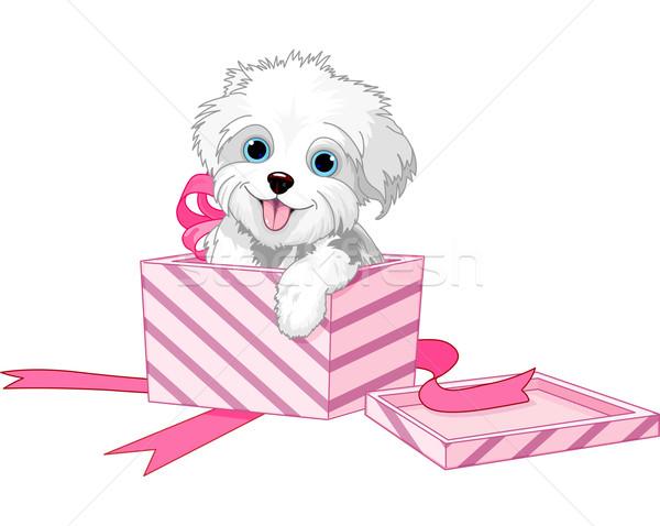 Köpek kutu sevimli köpek yavrusu içinde hediye kutuları Stok fotoğraf © Dazdraperma