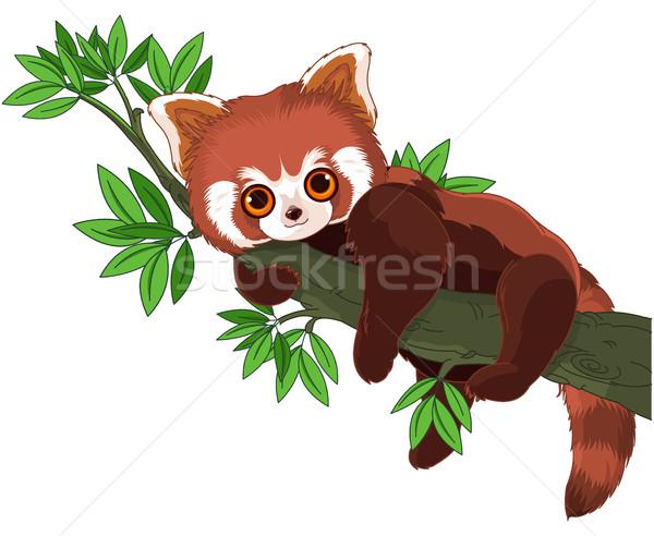 Rood panda cute slapen tak boom Stockfoto © Dazdraperma