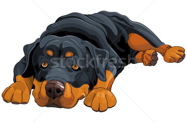 Rottweiler ilustracja piękna zabawy karty zwierząt Zdjęcia stock © Dazdraperma