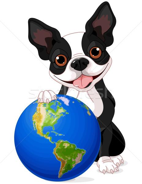 Boston Terrier Earth Day Stock photo © Dazdraperma