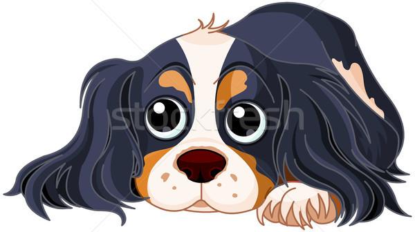 Spaniel Dog  Stock photo © Dazdraperma