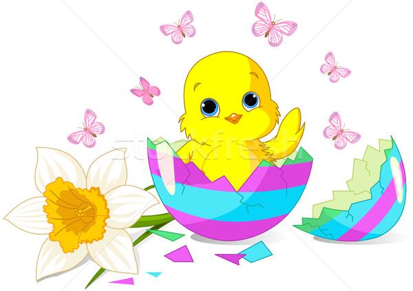 Пасху куриного удивление сидят сломанной пасхальное яйцо Сток-фото © Dazdraperma