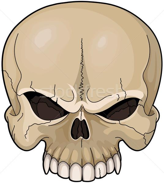 Skull Stock photo © Dazdraperma