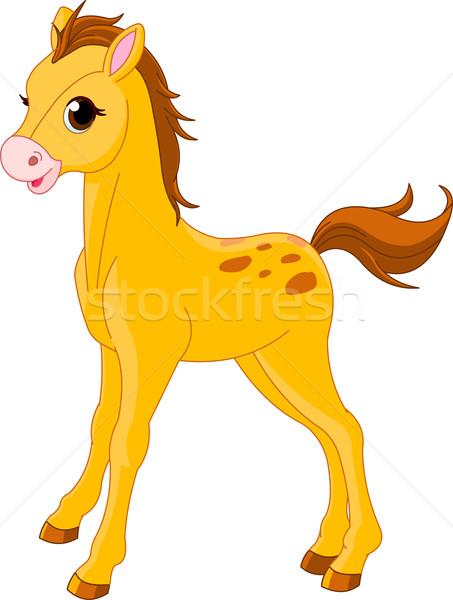 Cute Horse foal   Stock photo © Dazdraperma