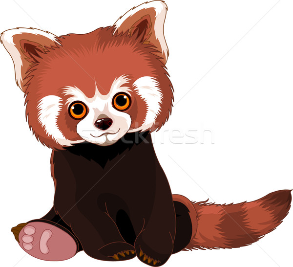 Cute Red Panda Stock photo © Dazdraperma