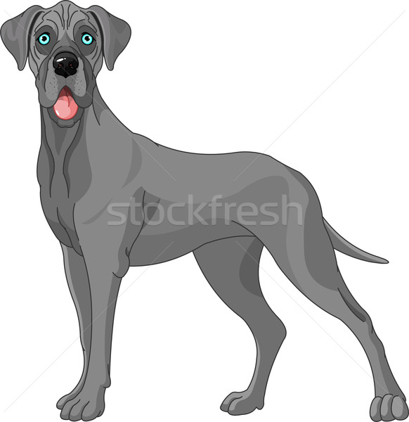 Great Dane dog  Stock photo © Dazdraperma