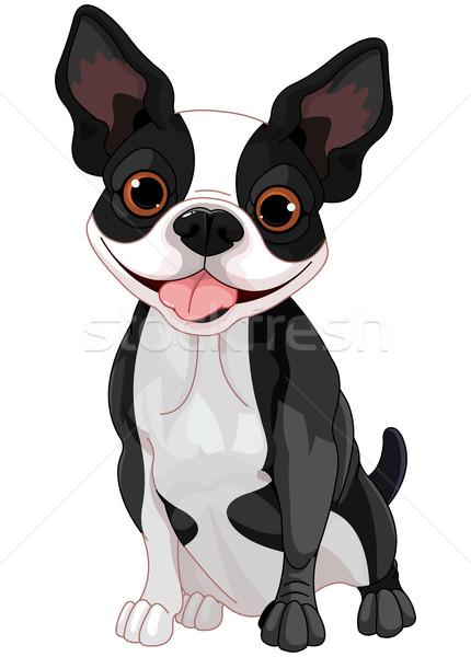 Boston terrier illustrazione cute divertente carta Foto d'archivio © Dazdraperma
