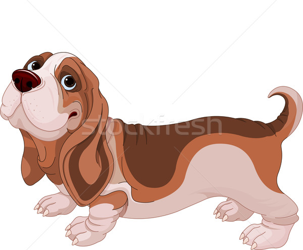Basset Hound Stock photo © Dazdraperma