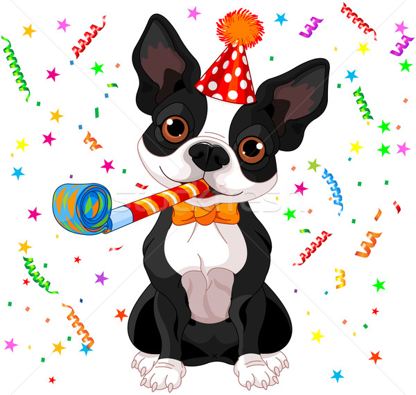 Boston terrier party Stock photo © Dazdraperma
